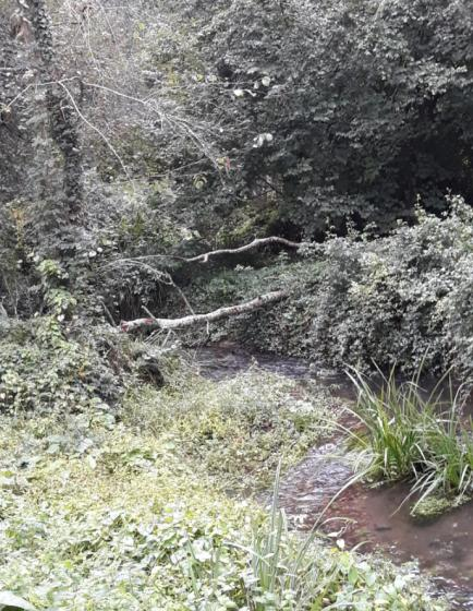 La Concejalía de Medio Ambiente informa de una  tala en el río Maceiras