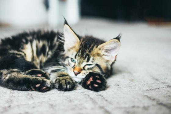 Recomendacións do Concelleiro de Medio Ambiente para colonias felinas ou centros de protección animal