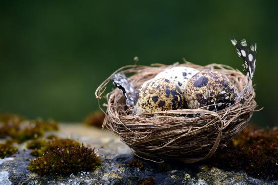 Avifauna en período de cría