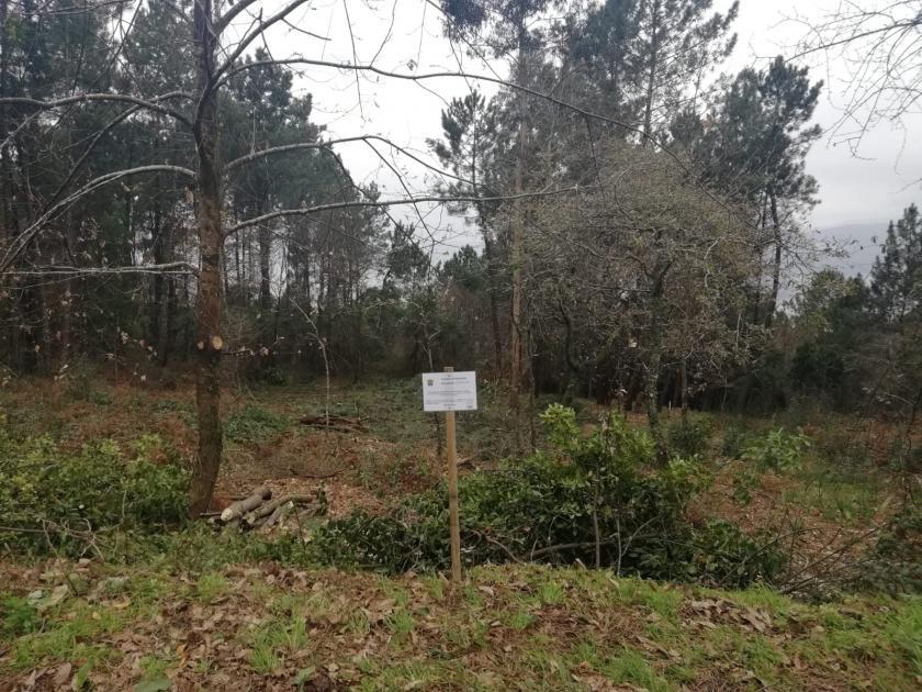 El Concello de Redonedela toma medidas en relación a las fincas abandonadas