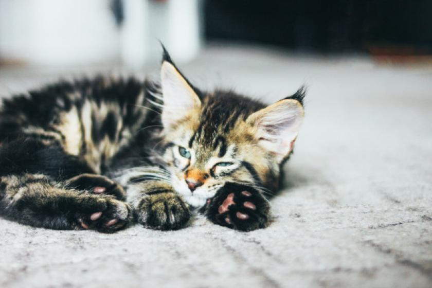 Recomendaciones del Concejal de Medio Ambiente para colonias felinas o centros de protección animal
