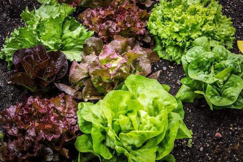 Información sobre a venda de productos agrícolas e desprazamentos ás leiras durante o Estado de Alarma