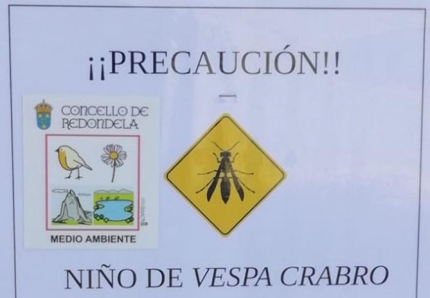 Medio ambiente avisa sobre a presenza dun niño de Vespa crabro no paseo do Río Maceiras